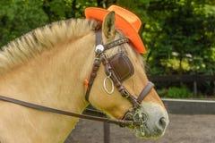 伴侣动物-马 免版税库存图片