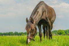 伴侣动物-马 免版税图库摄影