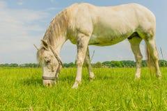 伴侣动物-马 免版税库存照片
