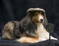 侦探宠物 免版税图库摄影