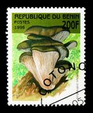 侧耳属ostreatus,蘑菇serie,大约1998年 免版税库存照片