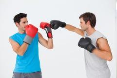 侧视图两位男性拳击手实践 免版税图库摄影