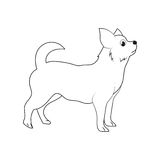 从侧视图概述的常设狗 免版税库存照片