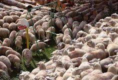 侵略庭院的绵羊群  库存照片