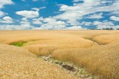 侵蚀域横向土壤夏天麦子 免版税库存照片