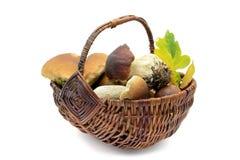 便士在篮子的小圆面包蘑菇在白色隔绝了背景 免版税库存图片