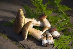 便士盖帽蘑菇 库存照片