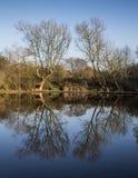 便餐在构筑步行者的树池塘在冬天 免版税库存照片