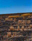 俄勒冈分站火-小的海岛在黑色海洋  —在Dufur,俄勒冈 免版税图库摄影