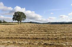 俄勒冈在中间的Willamette谷的增长的裸麦草收获,马里昂县 免版税库存照片