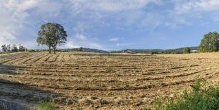 俄勒冈在中间的Willamette谷的增长的裸麦草收获,马里昂县 库存图片