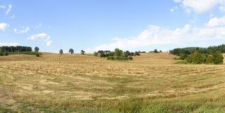 俄勒冈在中间的Willamette谷的增长的裸麦草收获,马里昂县 免版税库存图片