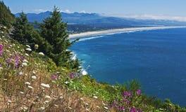 俄勒冈有野花的海岸全景 免版税库存照片