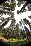 俄勒冈森林 免版税库存照片