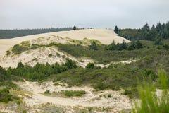 俄勒冈沙丘的边缘 免版税库存照片
