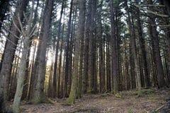 俄勒冈沿海森林足迹 免版税库存图片