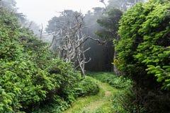 俄勒冈沿海足迹和雾 库存照片