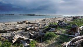 俄勒冈海滩风景 免版税图库摄影