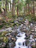 俄勒冈状态森林 免版税库存照片
