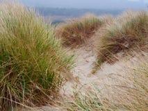 俄勒冈的沙丘 库存照片