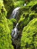 从俄勒冈的生苔瀑布 库存照片