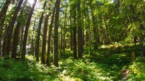 俄勒冈豪华的森林645