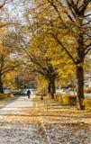 俄国、Vyborg、秋天和冬天 库存照片