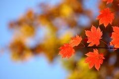 俄国。 秋天。 26 免版税图库摄影