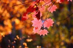 俄国。 秋天。 32 免版税库存照片