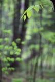 俄国。 秋天。 46 免版税库存照片
