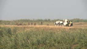 俄国军队的专栏在巡逻的在车臣 股票视频