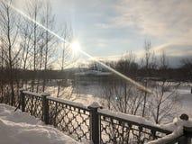 俄国冬天森林 免版税库存照片