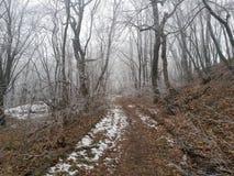 俄国冬天森林 库存图片