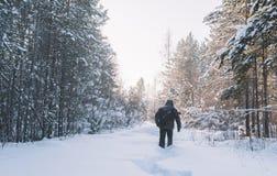 俄国冬天森林 免版税图库摄影