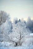 俄国冬天风景树在森林里 库存图片