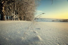 俄国冬天风景树在森林里 免版税库存图片