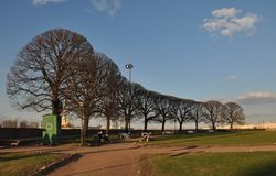 俄国北部市圣彼德堡 被种植的大道树 Leto 公园,天空,蓝色,天际河 免版税库存照片