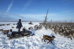 俄国原史驯鹿牧民日常生活在北极 免版税库存照片