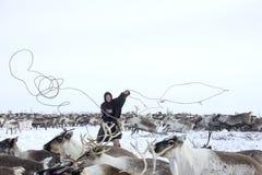 俄国原史驯鹿牧民日常生活在北极 图库摄影