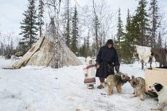 俄国原史驯鹿牧民日常生活在北极 库存照片
