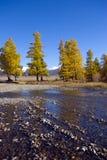 俄国干草原横向 库存图片