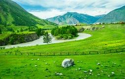 俄国村庄和农村风景在俄罗斯的阿尔泰 图库摄影