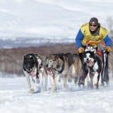 俄国杯拉雪橇狗赛跑雪学科,堪察加拉雪橇狗赛跑Beringia 图库摄影