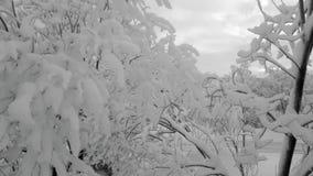 俄国极性冬天,在mountant的多雪的树 库存图片