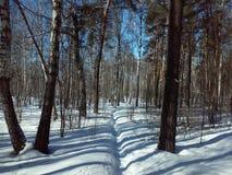 俄国森林在冬天 免版税库存图片