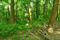 俄国森林的神奇土地! 图库摄影
