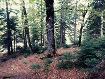 俄国森林 免版税图库摄影