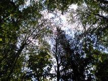 俄国森林 库存图片