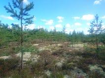 俄国森林 免版税库存图片