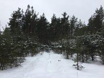 俄国深绿色冬天 图库摄影